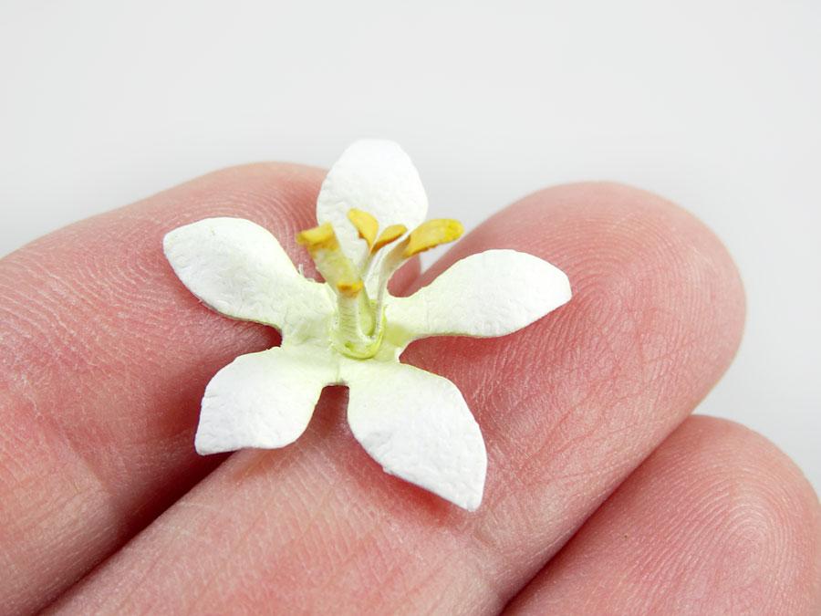 Jasmine-Gift-Card-Holder-Annette-Green-17