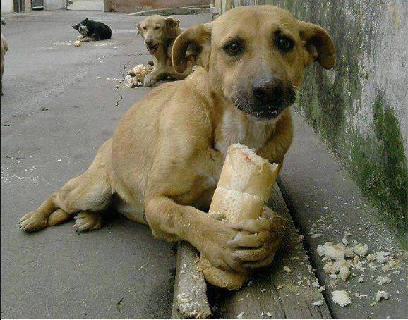 Hungry Puppy - GiveMeSomeEnglish!!!