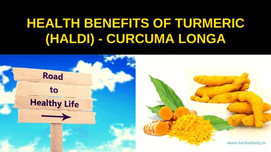HEALTH-BENEFITS-OF-TURMERIC-HALDI-CURCUMA-LONGA-100-प्राकृतिक-टॉनिक