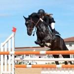 Comparatif : Équitation