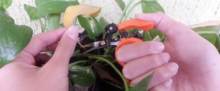 Forbici da giardinaggio: cura delle piante e raccolta di frutta e verdura