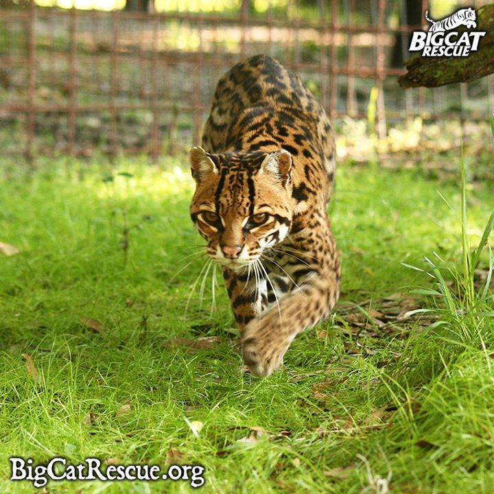 Amazing Grace on the prowl.