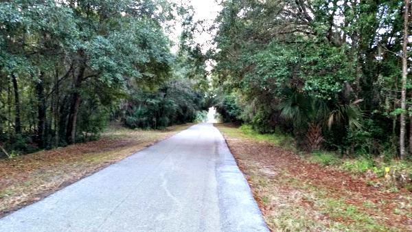 Trail near my mom's house.