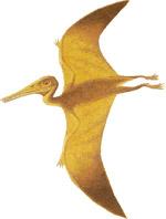 Pterosauro, elaborazione grafica (credit: schools.net.au)