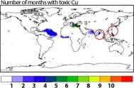 In blu le aree in cui è più alta la concentrazione di rame negli aerosol (credit: A. PAYTAN ET AL., PNAS EARLY EDITION, 2009)