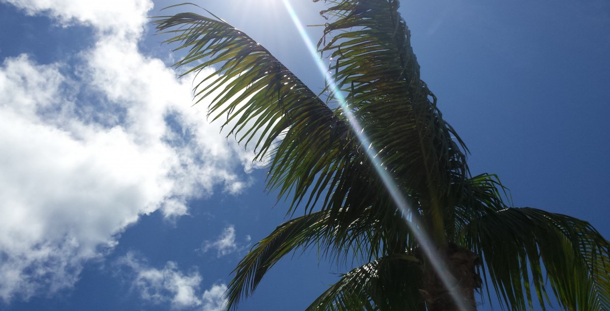 cropped-cropped-palm-sky3.jpg
