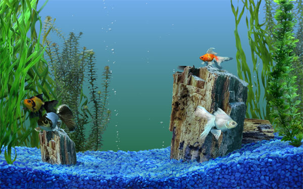 Windows fish tank screensaver onivysymy for Fish tank screen