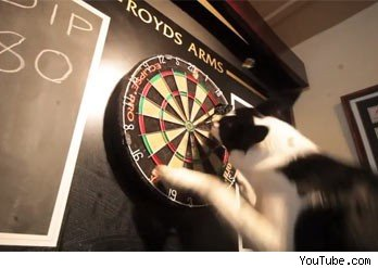 dog plays darts