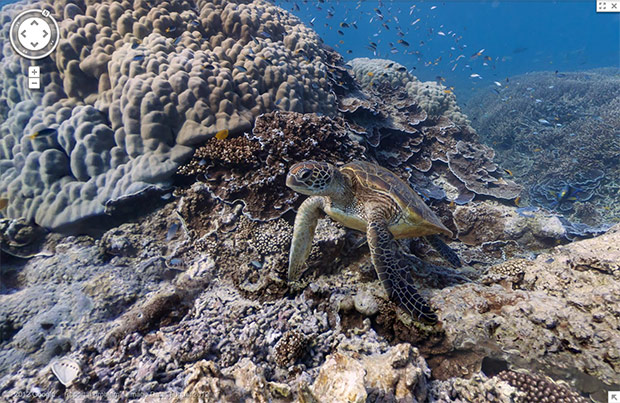 Google Street View gets its first underwater panoramic images, ready for desk-based scuba expeditions