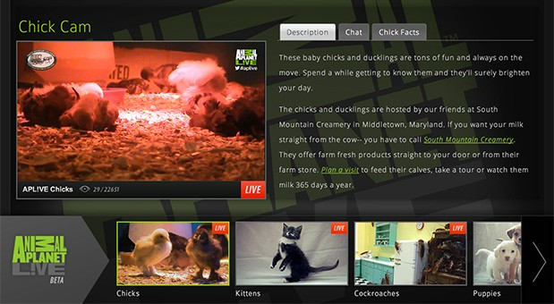 Animal Planet critter livestreams arrive on Samsung Smart TVs, coming to Roku and Xbox Live