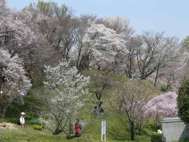 Bolsas MEXT para graduação no Japão | Foto: Kenpei, via Wikimedia Commons