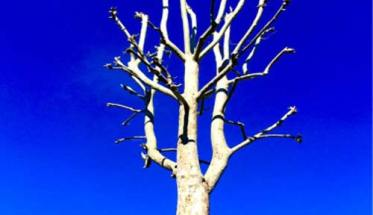 albero in copertina del disco Nova sui prati notturni