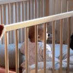Une chambre pour 3 enfants : la chambre de nos filles