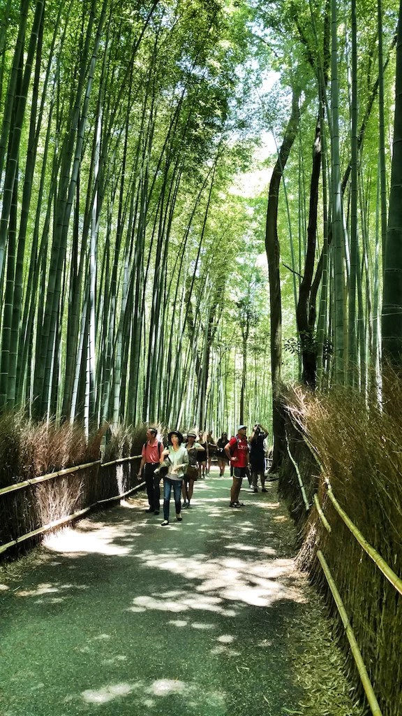 Bosque de Bambú por Moto X Style