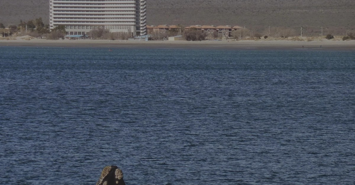 Check In Episodio 6: Puerto Madryn