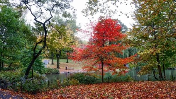 Otoño en el Central Park