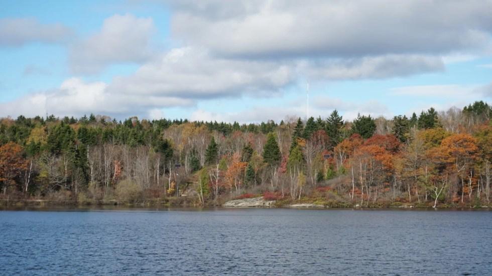 Lago Lily