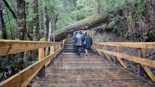 Camino a Cascada de los Cántaros