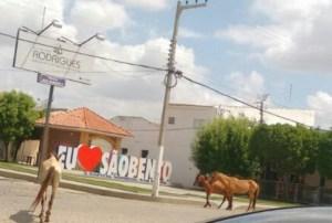 Enquanto população sofre com problemas na Saúde, prefeitura esbanja letreiro de R$ 50 mil
