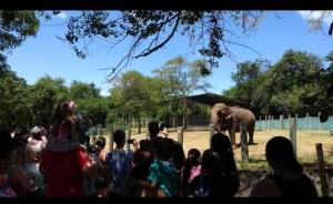 PMJP e Ministério Público fecham acordo e Lady será transferida para o Santuário de Elefantes