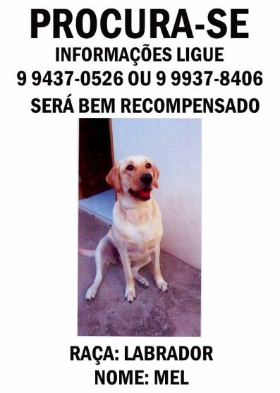 Labrador perdido