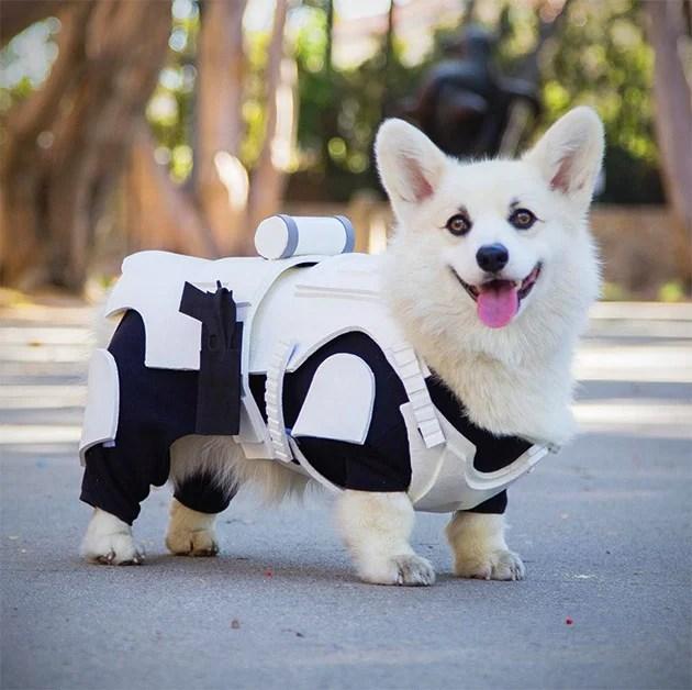 stormtrooper-corgi
