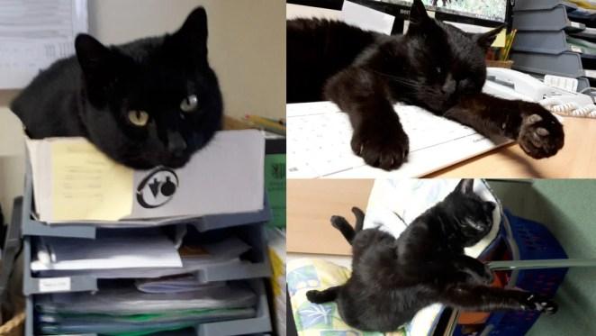 Konrad the Kitten's inspiration - Morle