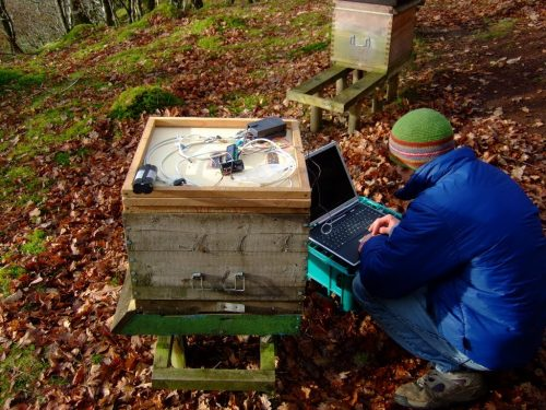Glyn bent down infront of a hive checking the original BeeMonitor setup