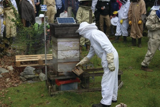 BeeMonitor complete with solar panel to power it. The Snowdonia bees produce 12 to 15 kg of honey per year