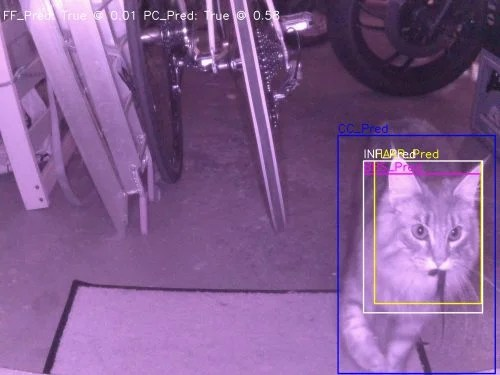 A nightvision image of a cat approaching a cat flap with a mouse in its mouth