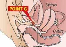Le point G localisé à 16,5 mm du méat urétral
