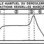 Réponse sexuelle masculine - Masters & Johnson, 1966