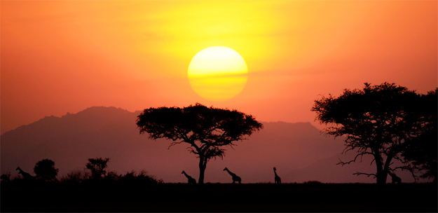 bigpic_safariaf1