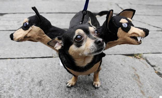 pet-halloween-costume-271__605