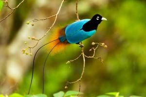 birds op paradice