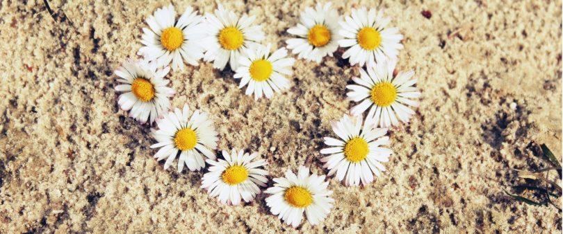 o que viajar me ensinou flores