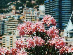 jardin-exotiques-monaco
