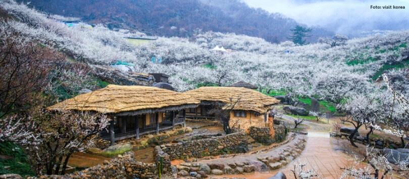 Destinos imperdíveis_Coréia do Sul