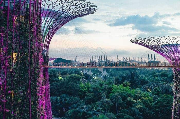 Gardens by the Bay tree canopy