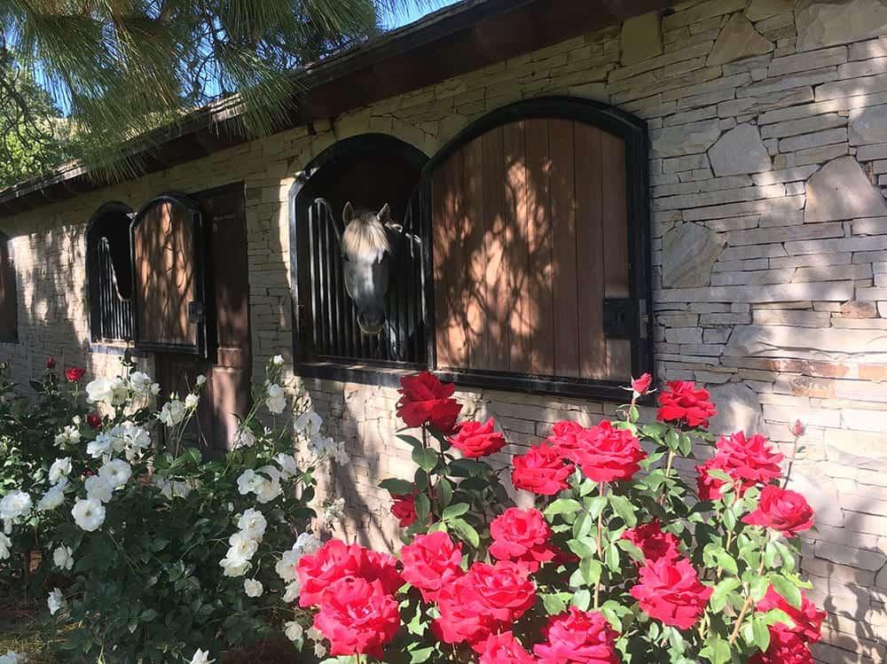 Horse stable at Bella Cavalli winery Santa Barbara