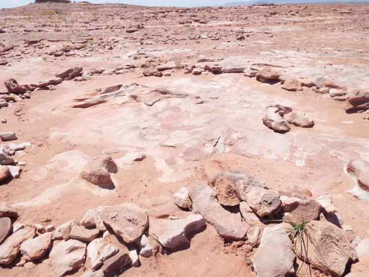 Genuine dinosaur bones just outside tuba city