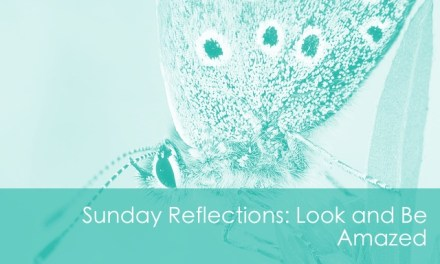 Sunday Reflection: Look and Be Amazed