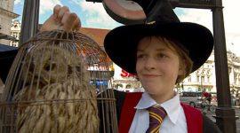 ¿Qué Harías por Trabajar en los Sets de Filmación de las Películas de 'Harry Potter'?