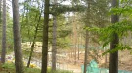 Nuevas Fotografías del Set de 'Las Reliquias de la Muerte' en el Bosque Swinley