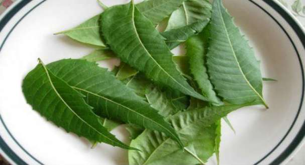 Neem for Skin Rashes