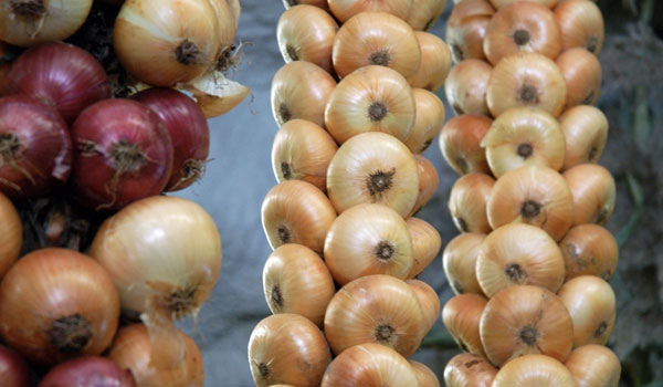 Onion for Common Cold