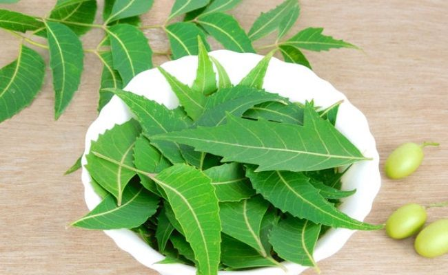 Indian Lilac or Neem for Vaginal Itching