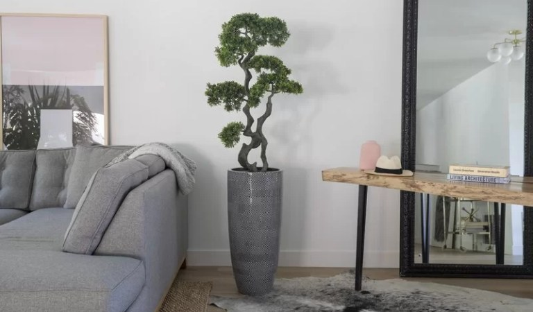 Top 10 Bonsai Trees To Decorate Your Home And Office