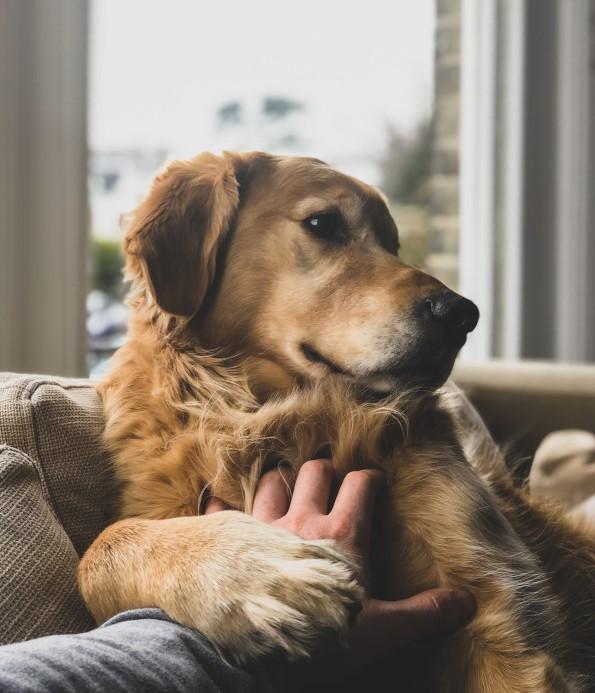 Mit Hund kuscheln wenn man krank ist