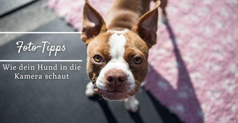 Read more about the article Foto-Tipps: Wie du dafür sorgst, dass dein Hund in die Kamera schaut